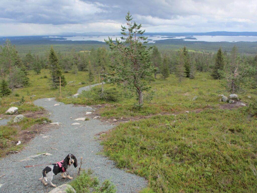 Koiran kanssa retkeilyreitistölle